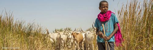 Soutenez les 37 villages de Ndiaël privés de leurs terres
